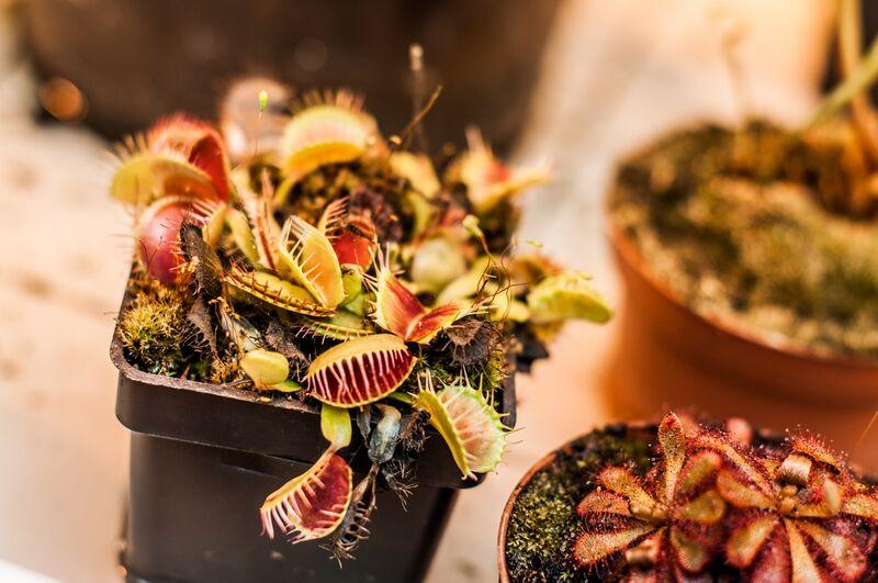 Plantes carnivores - serre tropicale de Marie Guibouin Decor Image