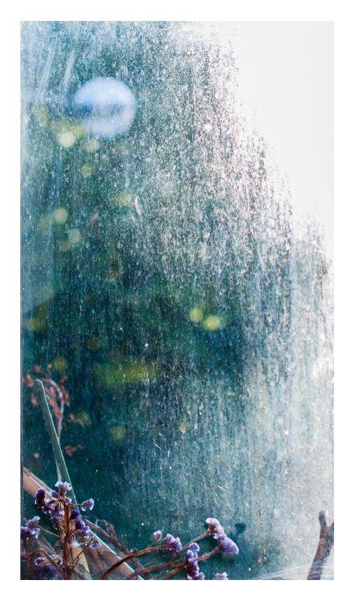 Bulle de lumière de Marie Guibouin, Prodi Art, violette, marie guibouin, bulle, vert, violet, fleurs, plantes, fenêtre, automne, lumière