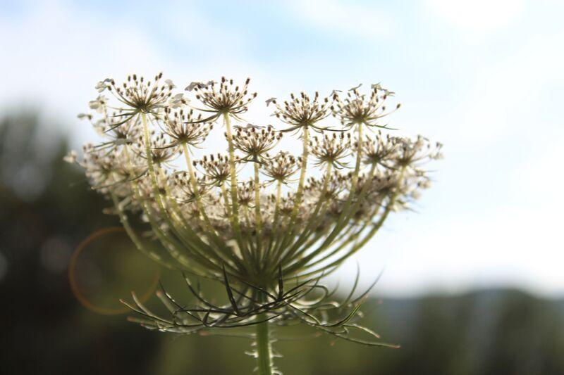 Fleur en lumière de jenny buniet Decor Image