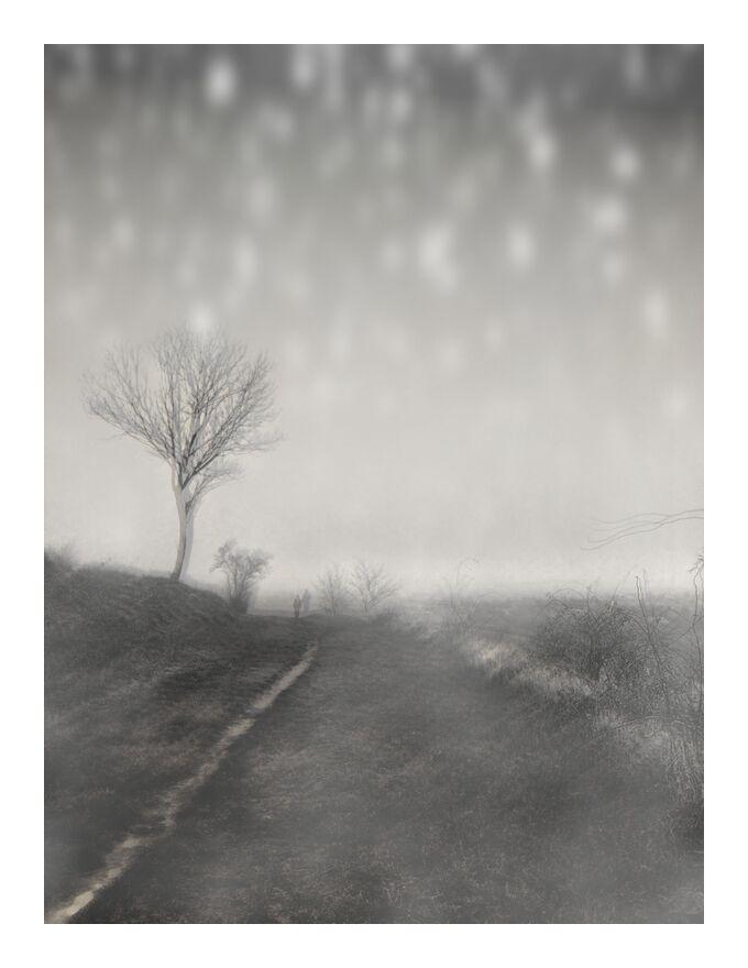 The winter path from Adam da Silva, Prodi Art, path, black-and-white, snow, winter, tree, nature, still life