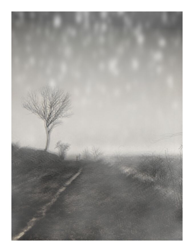 Le chemin d'hiver de Adam da Silva, Prodi Art, chemin, noir et blanc, neige, hiver, arbre, nature, nature morte