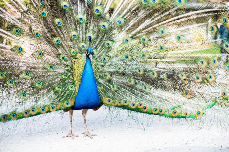 Ose offrir au monde la Beauté de ton Âme de Marie Guibouin Decor Image