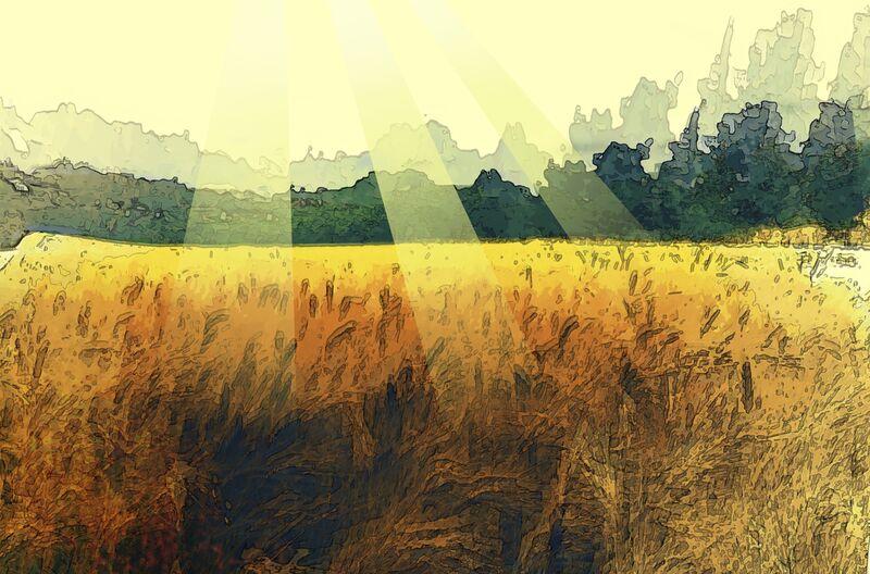 The wheat and its sun from Adam da Silva Decor Image