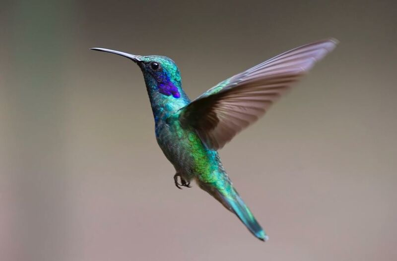 The Hummingbird from Pierre Gaultier Decor Image