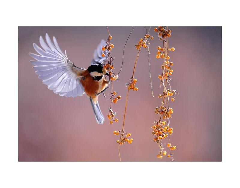 During the flight from Pierre Gaultier, Prodi Art, animal, animal, photography, bird, flying, macro, nature