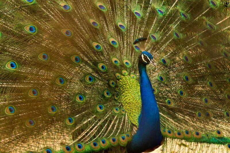 Les ailes du pan de Pierre Gaultier Decor Image