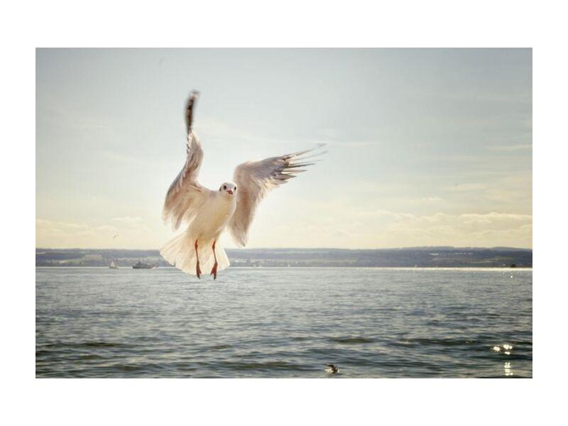 The approach of the seagull desde Pierre Gaultier, Prodi Art, pájaro, volador, gaviota, océano, mar, Gaviota, agua