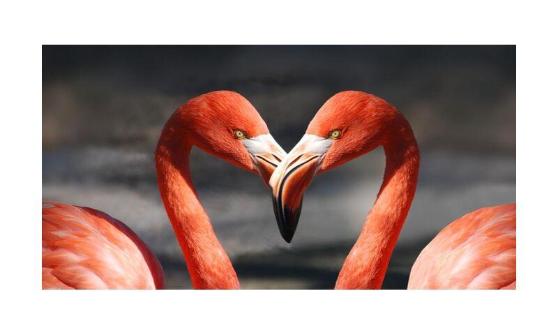 Couple of flamingo from Pierre Gaultier, Prodi Art, animals, birds, feathers, flamingo, flamingos, plumage