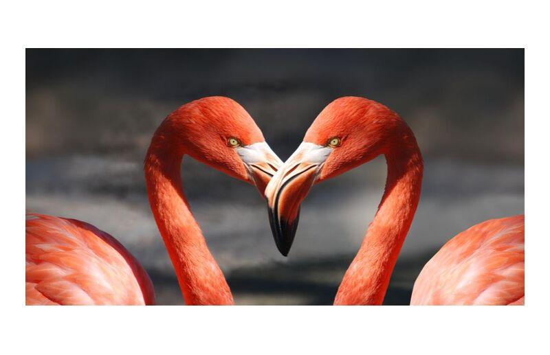 Couple de flamant rose de Pierre Gaultier, Prodi Art, animaux, des oiseaux, plumes, flamant, flamants roses, plumage
