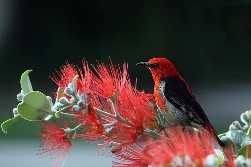 Oiseau sur plante de Pierre Gaultier Decor Image