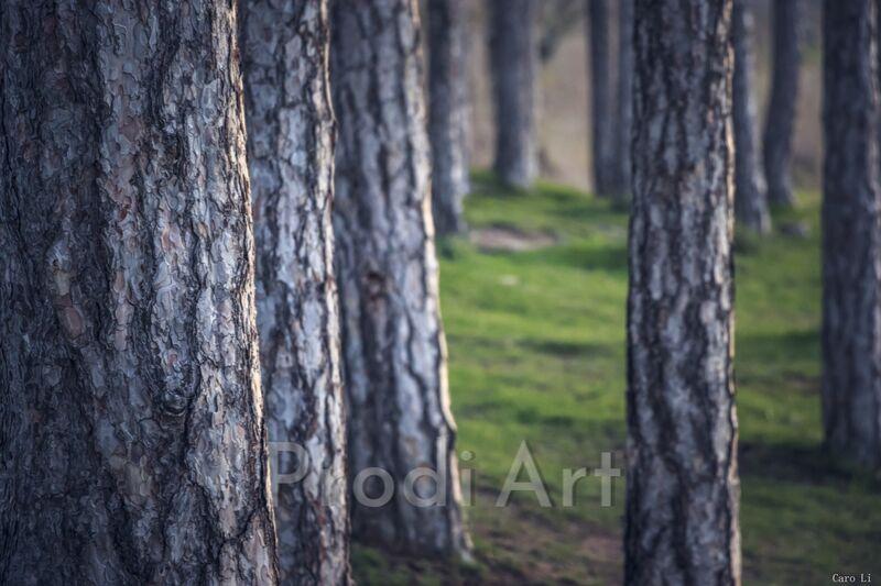 Trees de Caro Li Decor Image