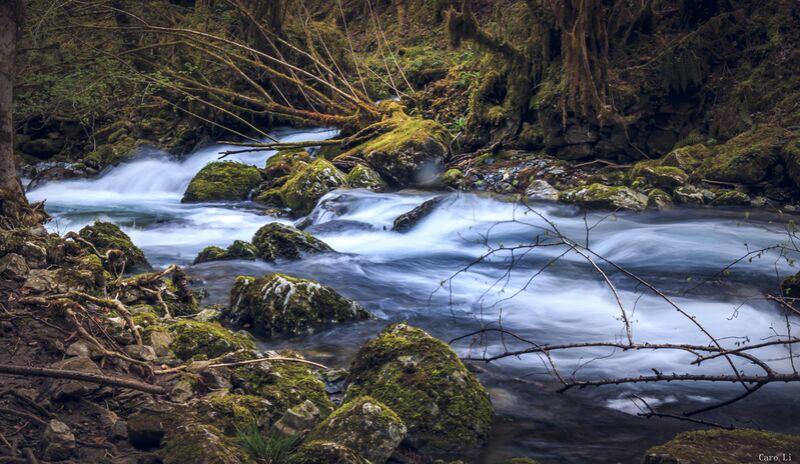 The river de Caro Li Decor Image