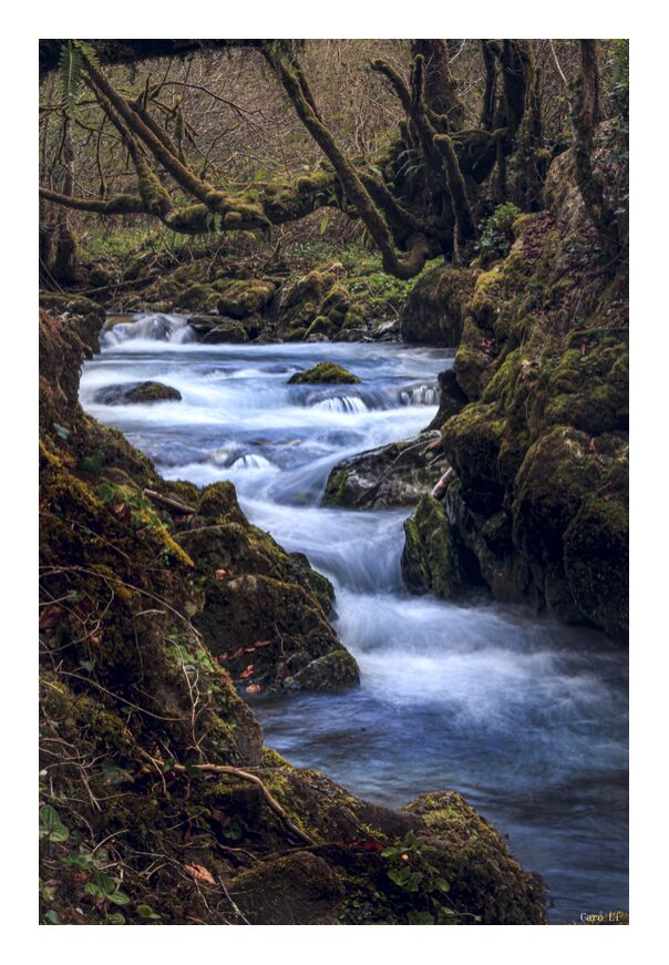 The River from Caro Li, Prodi Art, landscape, landscape, nature, River, river