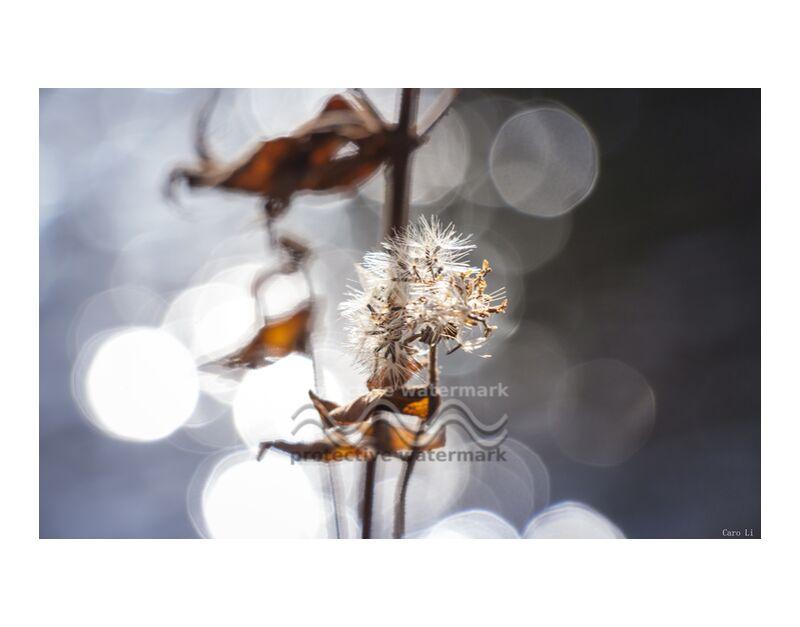 Bulle de Caro Li, Prodi Art, paysage, fleur, nature, paysage, fleur