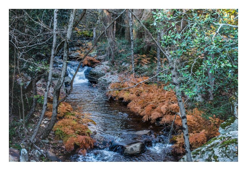 Le repère des Elfes de la forêt de Marie Guibouin, Prodi Art, marie guibouin, nature, arbres, fougère, forêt, montolieu