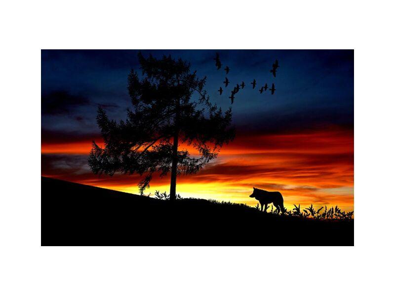 Waiting from Aliss ART, Prodi Art, animal, backlit, clouds, colorful, dawn, desert, dusk, evening, landscape, lighting, outdoors, silhouette, sunrise, sunset, tree, wolf, afterglow, Dark Sky, flock of birds