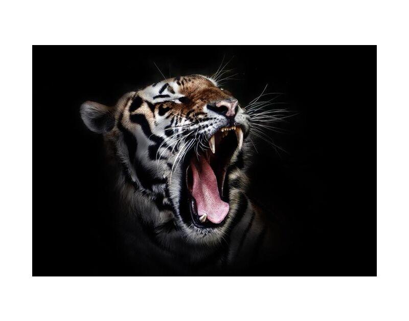 Férocité de Aliss ART, Prodi Art, chat sauvage, faune, tigre, gros plan, gros chat, photographie animale, animal