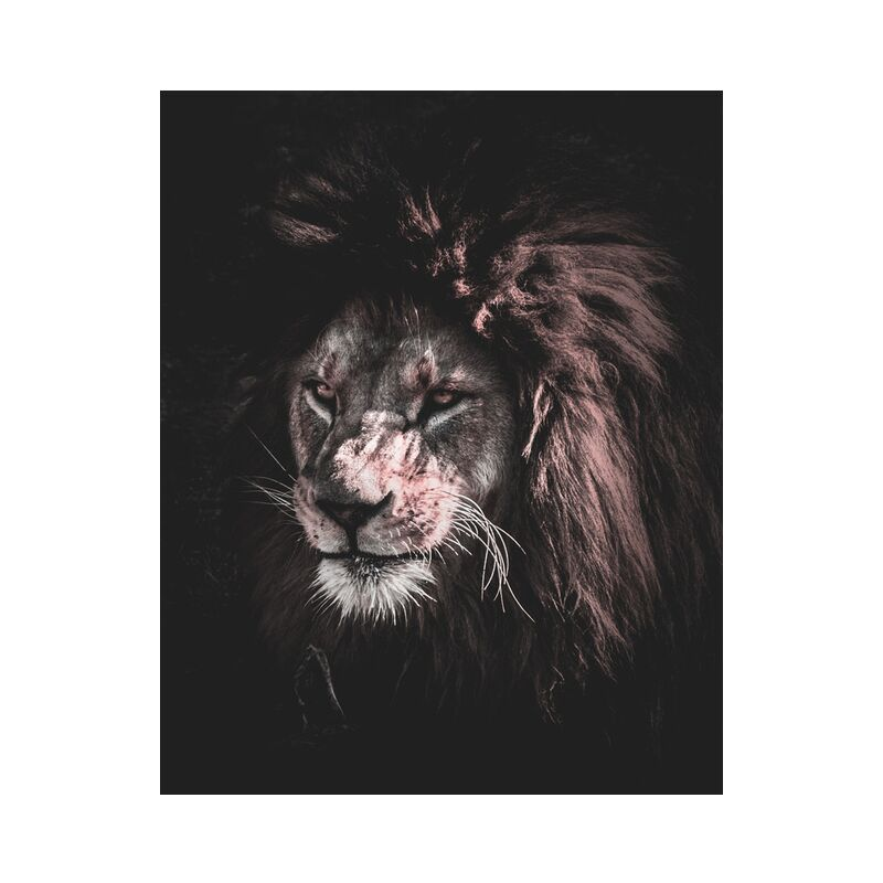 King of nature from Aliss ART, Prodi Art, animal, animal photography, big, big cat, carnivore, close-up, danger, dangerous, eyes, felidae, feline, fur, head, hunter, Lion, mammal, outdoors, predator, rocks, staring, whiskers, wild, wild animal, wildlife, zoo, king of the jungle, mouth, stare
