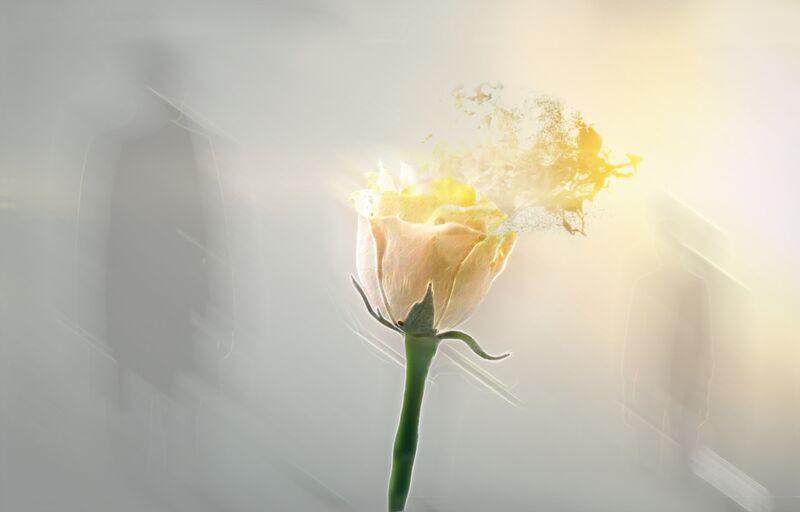 Au fil du vent de Adam da Silva Decor Image