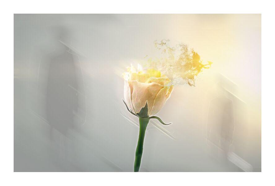 Over Wind from Adam da Silva, Prodi Art, shadow, pink, Sun, green, yellow, flower