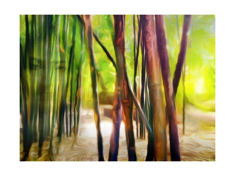 Behind the bamboos from Adam da Silva, Prodi Art, forest, light, green, brown, face, woman, bamboo, bambouseraie, sand