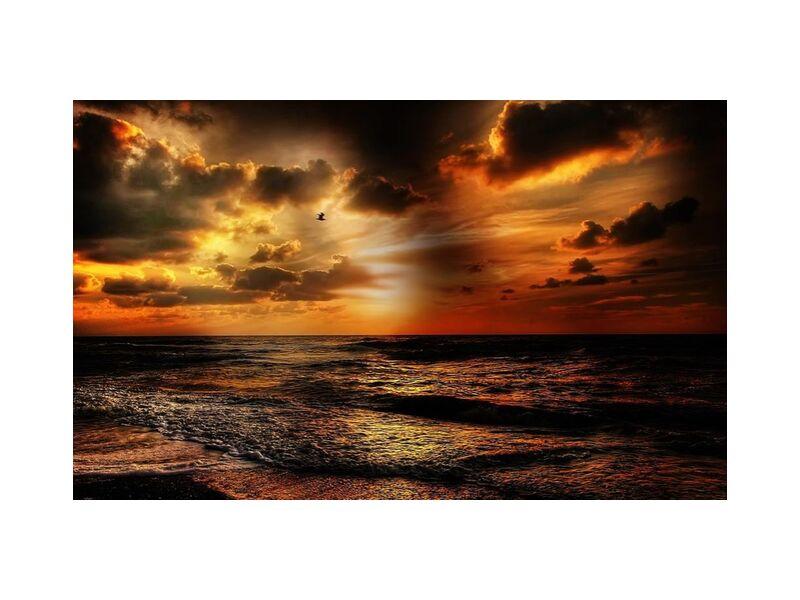 Lumière intense de Pierre Gaultier, Prodi Art, plage, beau, oiseau, nuages, Aube, or, paysage, nature, océan, en plein air, réflexion, sable, mer, paysage marin, rivage, ciel, soleil, lumière du soleil, couché de soleil, eau, formation de nuages, côte, plage de sable, seafoam, rayon de soleil, vagues