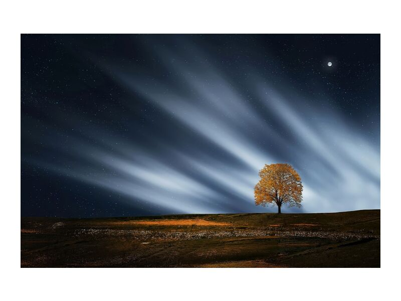 The night tree from Pierre Gaultier, Prodi Art, outdoor, nature, environment, scenic, scenery, Moon, calm, landscape, evening, night, peaceful, tree, scene, lone, breathtaking, serene, stars