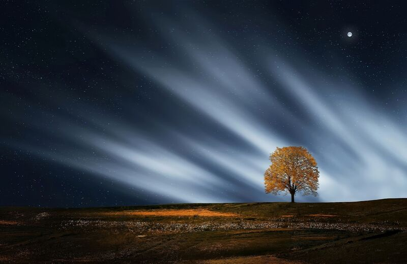 The night tree from Pierre Gaultier Decor Image