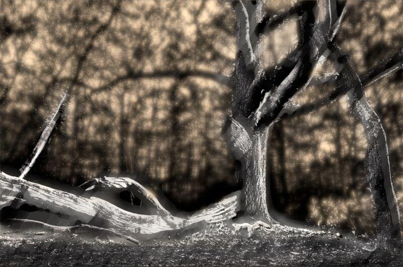 The shadow of the trunk from Adam da Silva Decor Image