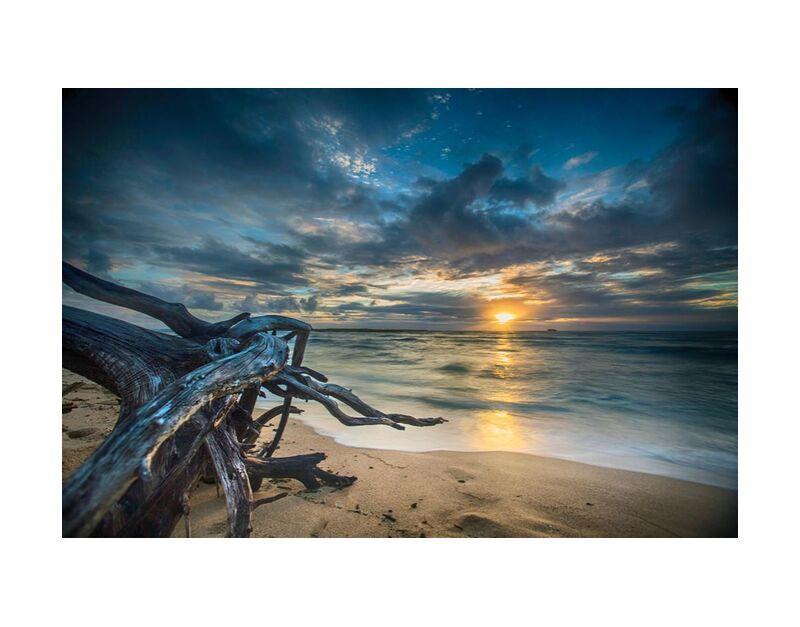 Le coucher de soleil de Aliss ART, Prodi Art, tree trunk, eau, couché de soleil, lever du soleil, paysage marin, mer, crépuscule, Aube, plage, ciel, rivage