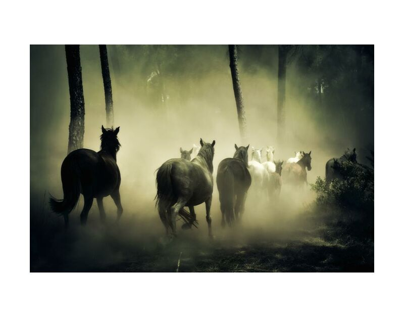 حرية from Aliss ART, Prodi Art, woods, wildlife, outdoors, sea, cattle, horses, forest, fog, animals