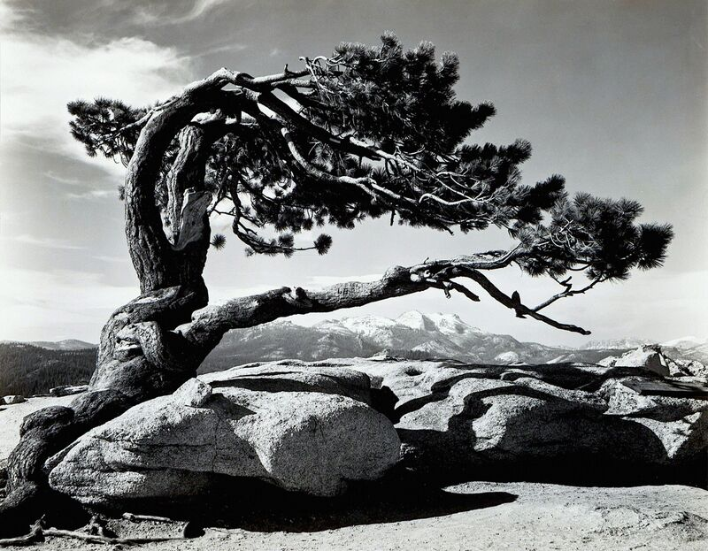 Jeffrey Pine, Sentinel Dome - ANSEL ADAMS 1940 de Aux Beaux-Arts Decor Image