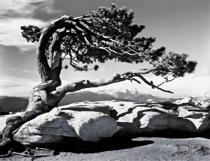 Jeffrey Pine, Sentinel Dome - ANSEL ADAMS 1940 desde AUX BEAUX-ARTS Decor Image