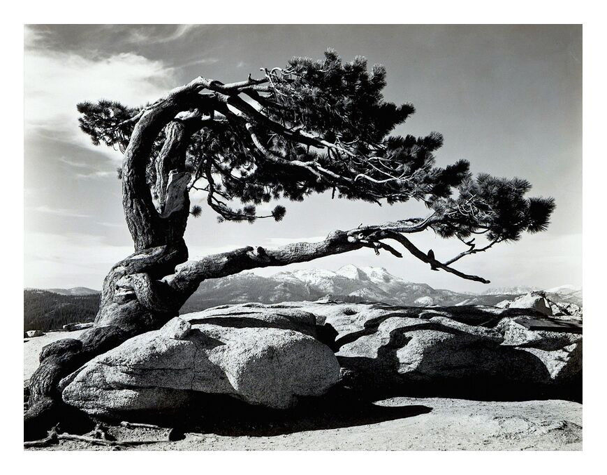 Jeffrey Pine, Sentinel Dome - ANSEL ADAMS 1940 de AUX BEAUX-ARTS, Prodi Art, ANSEL ADAMS, noir et blanc, Roche, montagnes, arbre, stylo, nuages