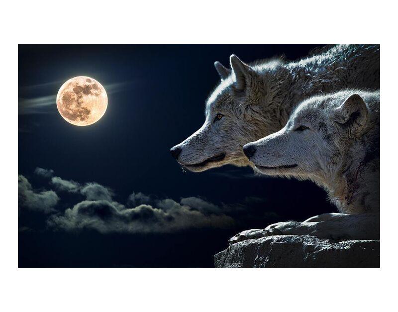 حراس الليل from Aliss ART, Prodi Art, canine, canidae, wolves, wild animal, sky, rock, night, nature, moonlight, Moon, fur, full moon, evening, clouds, close-up, animal photography, animal