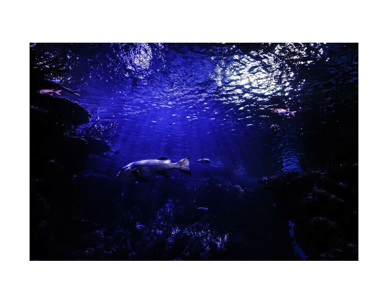 العالم الازرق from Aliss ART, Prodi Art, aquarium, water, underwater, sea, pond, ocean, lake, fish, deep, dark, animal