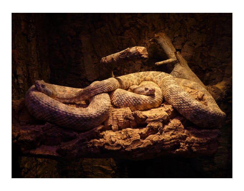 Consistency from Aliss ART, Prodi Art, animal, green, green mamba, lizard, mamba, nature, pattern, poison, reptile, snake, poisonous