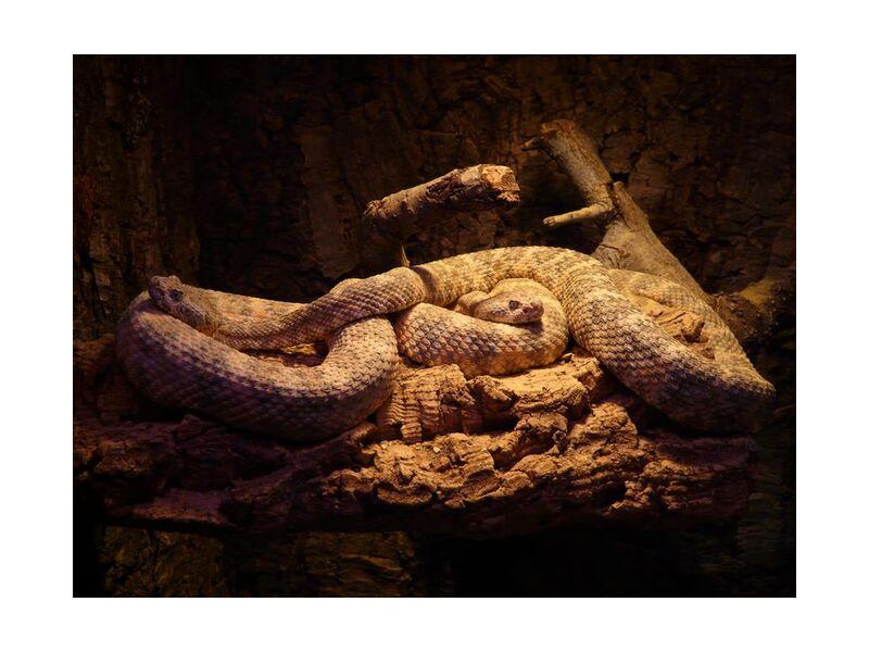 Consistency from Aliss ART, Prodi Art, poisonous, snake, reptile, poison, pattern, nature, mamba, lizard, green mamba, green, animal