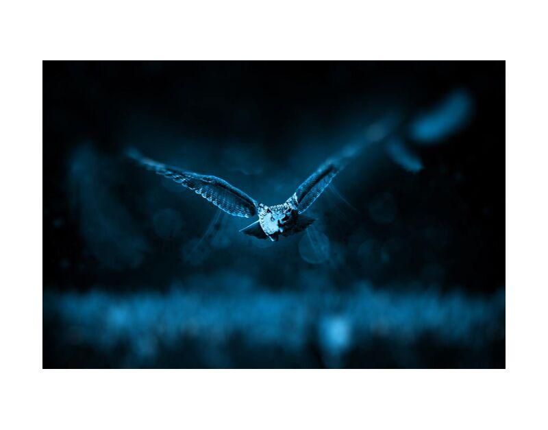 Owl from Aliss ART, Prodi Art, animal, bird, dark, fly, night, owl, wild animal
