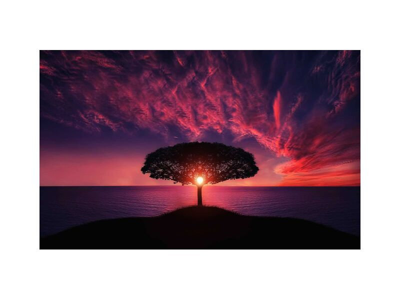 Le coeur de Aliss ART, Prodi Art, arbre, couché de soleil, lever du soleil, soleil, ciel, romantique, océan, nature, paysage