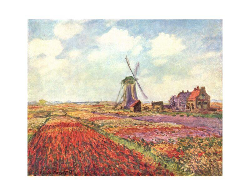Tulip fields in Holland - CLAUDE MONET 1886 desde AUX BEAUX-ARTS, Prodi Art, tulipán, campos de tulipanes, CLAUDE MONET, nubes, cielo, agricultura, naturaleza, molino, campos