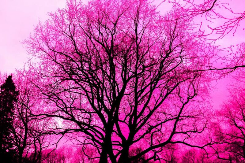 Life in pink from Aliss ART Decor Image