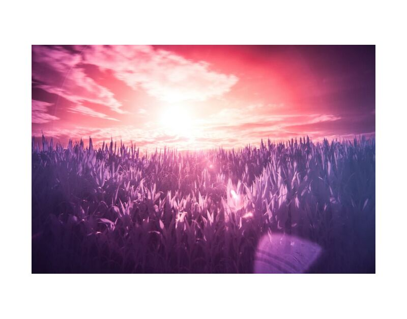 Dream from Aliss ART, Prodi Art, surreal, sunbeams, infrared, filter, Sun, red, purple, pink, meadow, lilac, dream