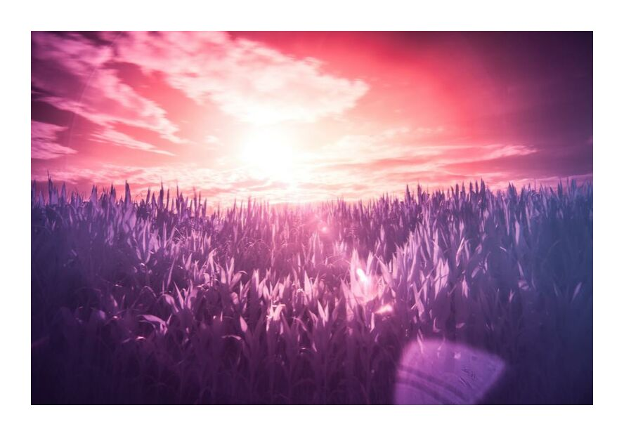 Dream from Aliss ART, Prodi Art, dream, lilac, meadow, pink, purple, red, Sun, filter, infrared, sunbeams, surreal