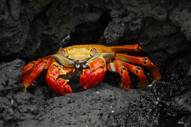 Crab from Aliss ART Decor Image