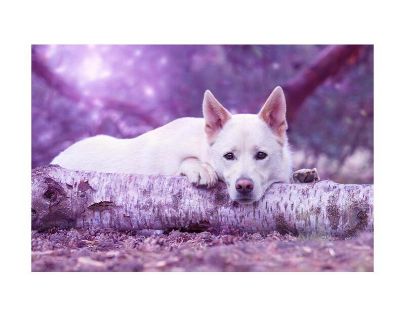 À l'écoute de Aliss ART, Prodi Art, photographie animale, portrait d'anima, brouiller, canin, mignonne, chien, fourrure, en regardant, mammifère, animal de compagnie, portrait, animal adorable, race, national, tronc