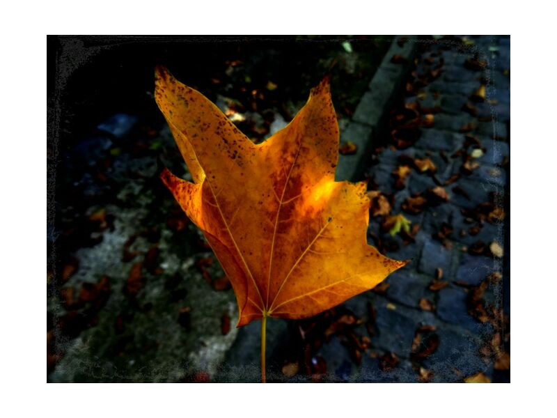 Feuille de JuJuPhotographies, Prodi Art, nature, arbre, automne, feuilles