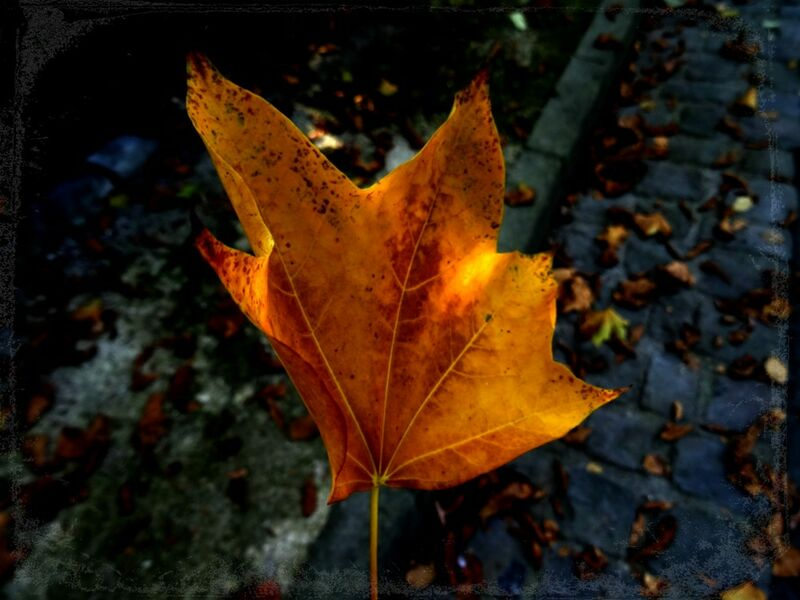 Feuille from JuJuPhotographies Decor Image