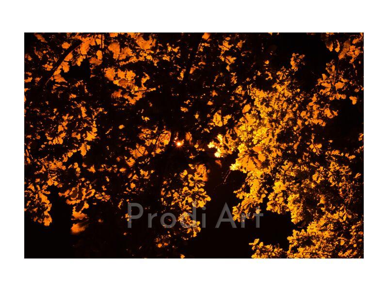 éclairage sur des feuilles d'arbre from ivephotography, Prodi Art, tree, lighting