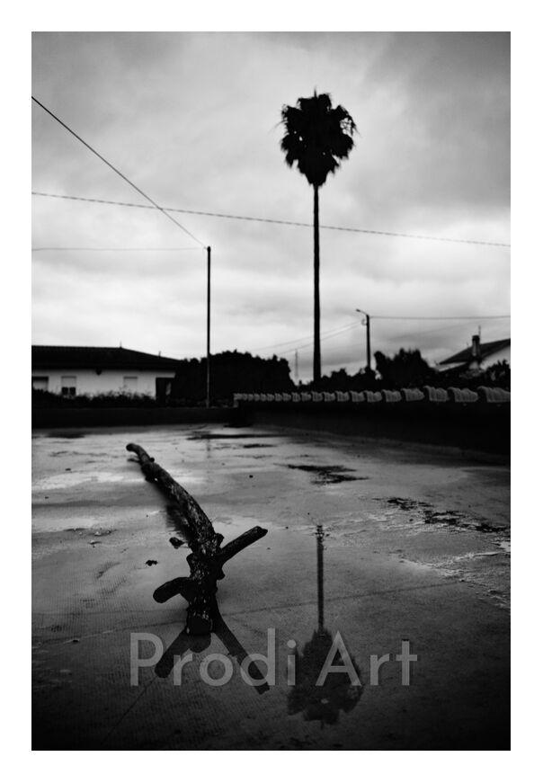 palmier avec souche et leur reflet from ivephotography, Prodi Art, palm